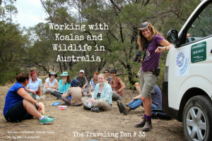 The Traveling Dan # 33 – Working with Koalas and Wildlife in Australia